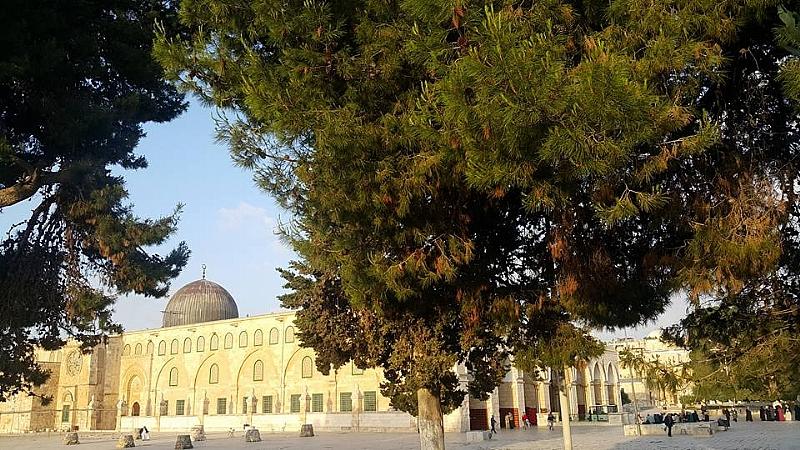Türkiye'de Filistin ve Filistinliler Hakkında Hangi Yalanlar Dillendiriliyor?